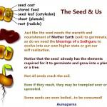 seed-germination-aumaparna