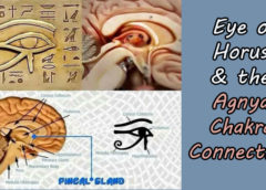 Eye of Horus, Pineal Gland & the Agnya Chakra Connection