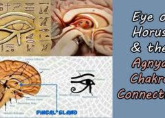 Eye of Horus, Pineal Gland & the Agnya Chakra Connection
